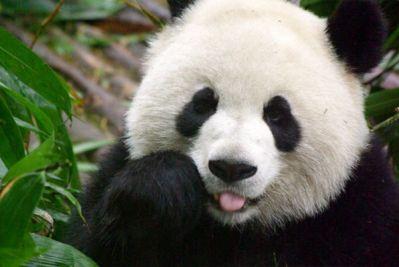 トルコリラは上海株大暴落でも無問題